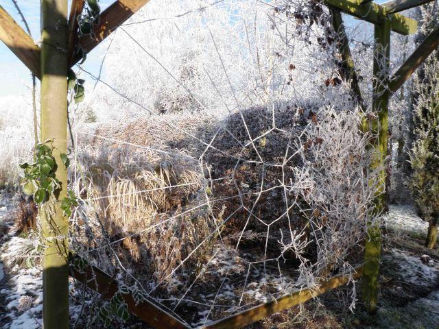 Wire Web 1