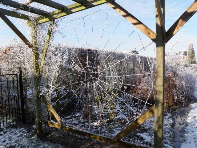 Wire Web 2